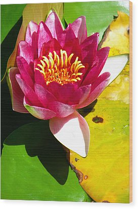 Water Lily Fc 2 Wood Print