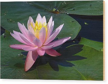 Water Lily In Mountain Lake Wood Print
