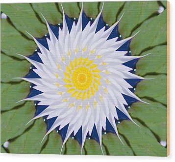 Water Lily Kaleidoscope Wood Print by Bill Barber