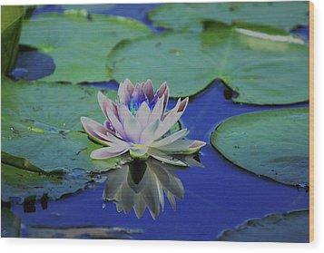 Water Lily  Wood Print by Karol Livote
