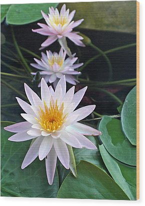 Wood Print featuring the photograph Water Lily Line by Farol Tomson
