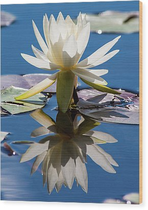 Wood Print featuring the photograph Water Lily by Mary Hone