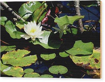 Water Lily Wood Print by Meta Gatschenberger
