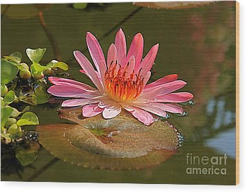 Wood Print featuring the photograph Water Lily by Nicola Fiscarelli