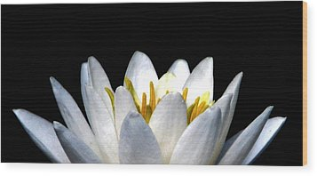 Water Lily Petals Wood Print by Angela Davies