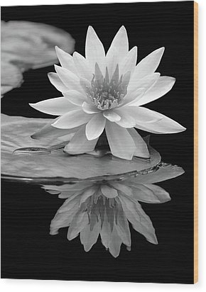 Water Lily Reflections I Wood Print
