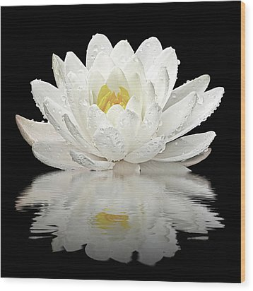 Water Lily Reflections On Black Wood Print by Gill Billington