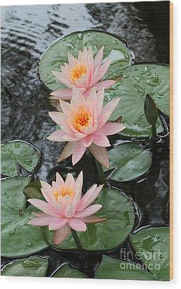 Water Lily Trio Wood Print by Sabrina L Ryan