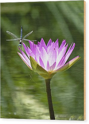 Wood Print featuring the photograph Water Lily With Dragon Fly by Bill Barber