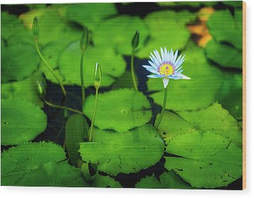 Wood Print featuring the photograph Water Logged by Ryan Manuel