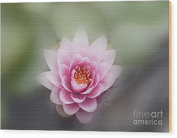 Water Lotus Flower Wood Print by Elaine Teague