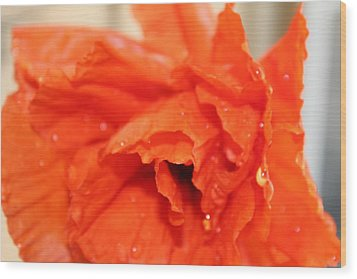 Water On Orange Wood Print by Christin Brodie