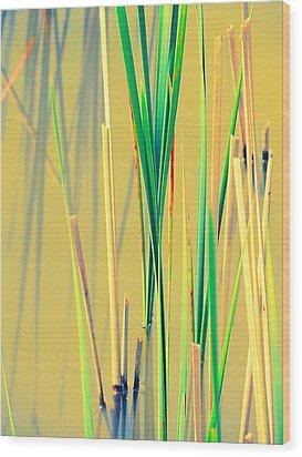 Water Reeds Soft Wood Print by Beth Akerman