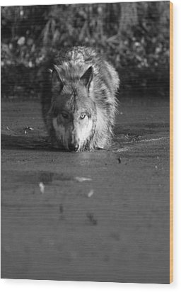 Wood Print featuring the photograph Water Wolf I by Shari Jardina