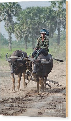 Waterbuffalo Driver Returns With His Animals At Day's End Wood Print by Jason Rosette