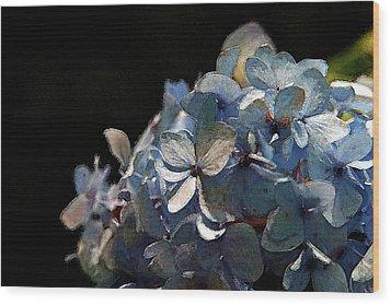 Watercolor Blue Hydrangea Blossoms 1203 W_2 Wood Print