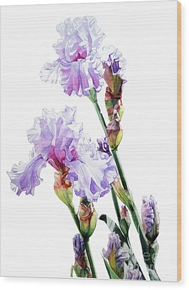 Watercolor Of A Tall Bearded Iris I Call Lilac Iris Wendi Wood Print