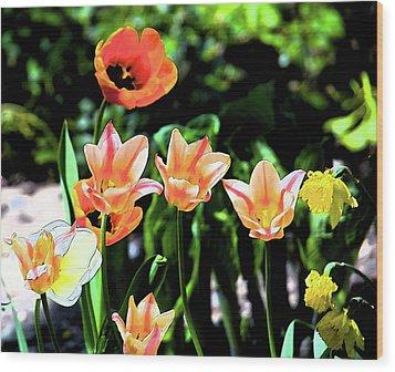 Watercolor Tulips Wood Print by Sheryl Thomas