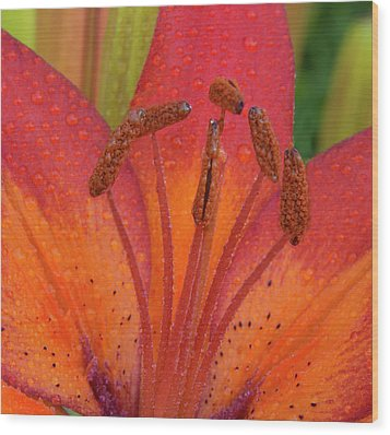 Wood Print featuring the photograph Watered Lily by Jean Noren