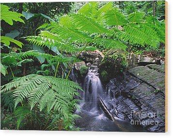 Waterfall And Tree Fern Wood Print by Thomas R Fletcher