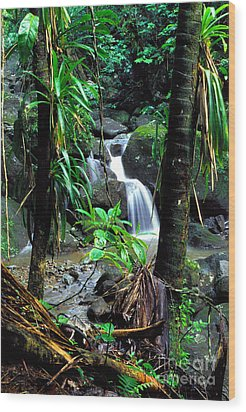 Waterfall El Yunque National Forest Mirror Image Wood Print by Thomas R Fletcher