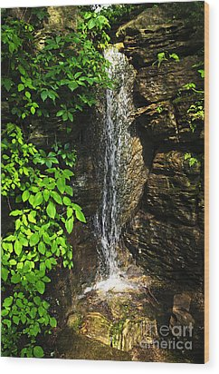 Waterfall In Forest Wood Print by Elena Elisseeva