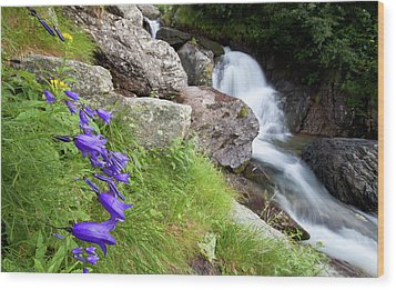 Waterfalls And Bluebells Wood Print by Mircea Costina Photography