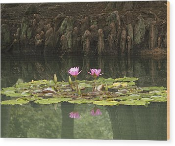 Waterlilies And Cyprus Knees Wood Print by Linda Geiger