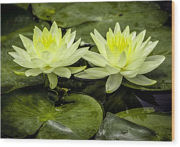 Waterlily Duet Wood Print by Venetia Featherstone-Witty