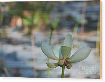 Waterlily Wash Horizontal Wood Print