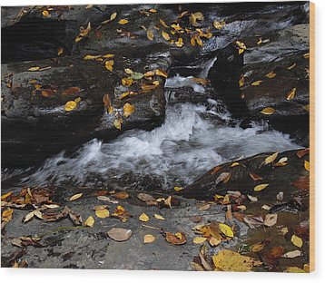 Watkins Glen 1 Wood Print by Vilas Malankar