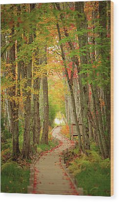 Wood Print featuring the photograph Way To Sieur De Monts  by Emmanuel Panagiotakis