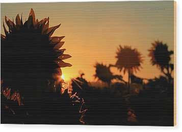 Wood Print featuring the photograph We Are Sunflowers by Chris Berry