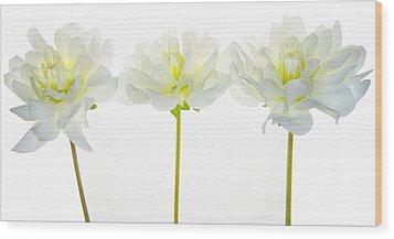 We Glow Wood Print by Rebecca Cozart