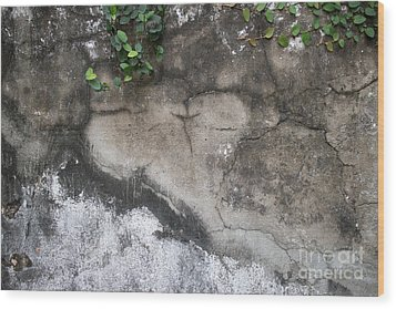 Wood Print featuring the photograph Weathered Broken Concrete Wall With Vines by Jason Rosette