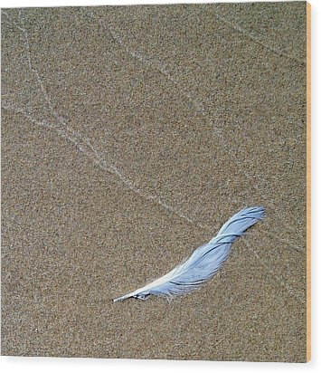 Weathered Feather  Wood Print by Michelle Calkins