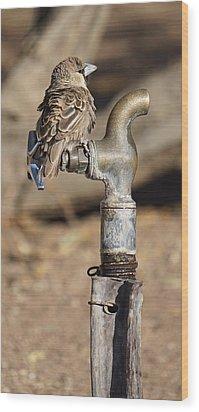 Weaver Bird Wood Print