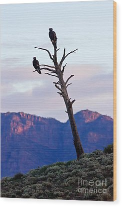 Wedge Tail Eagles Wood Print by Bill  Robinson
