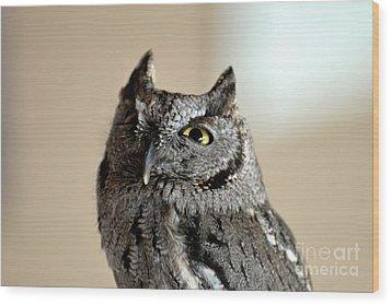 Wee Western Screech Owl Wood Print