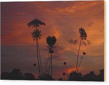 Weeds In The Sunrise Wood Print
