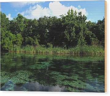 Wood Print featuring the photograph Weeki Wachee River by Barbara Bowen