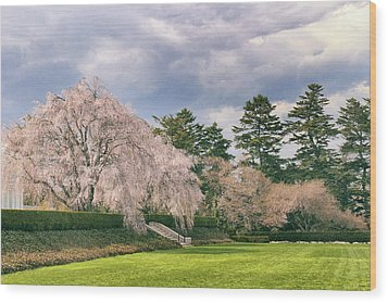 Wood Print featuring the photograph Weeping Cherry In Bloom by Jessica Jenney