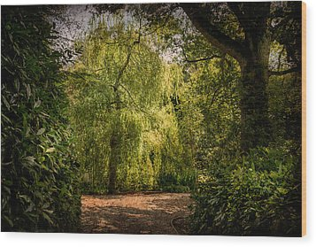 Wood Print featuring the photograph Weeping Willow by Ryan Photography