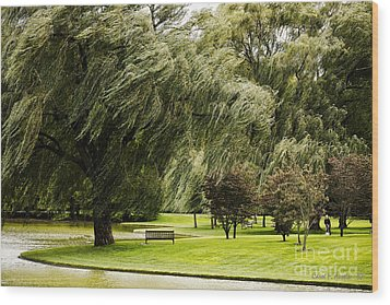 Weeping Willow Trees On Windy Day Wood Print by Carol F Austin