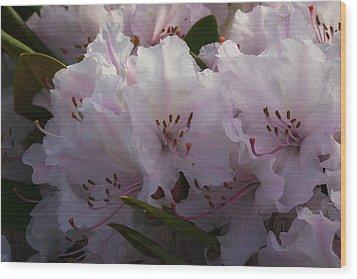 Weigela Blossom Wood Print