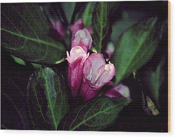 Weigela Florida Dark Horse Pink Flowering Shrub Wood Print by Laura Pineda