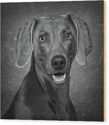 Wood Print featuring the photograph Weimaraner In Black And White by Greg Mimbs