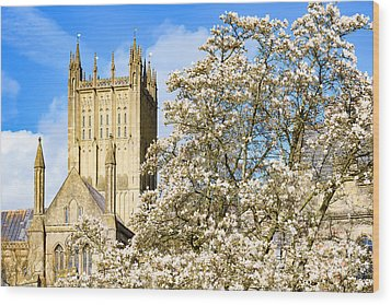 Wells Cathedral And Spring Blossom Wood Print by Colin Rayner
