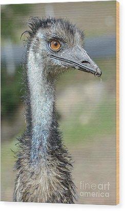 Emu 2 Wood Print by Werner Padarin