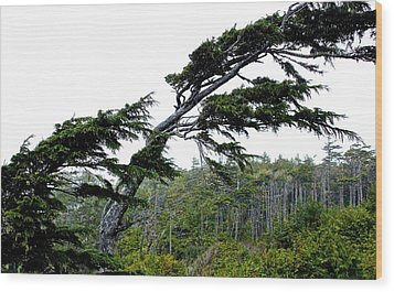 West Coast  Trees In Rain Wood Print